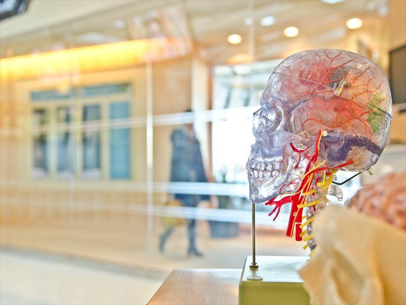 人間の脳から出る脳波